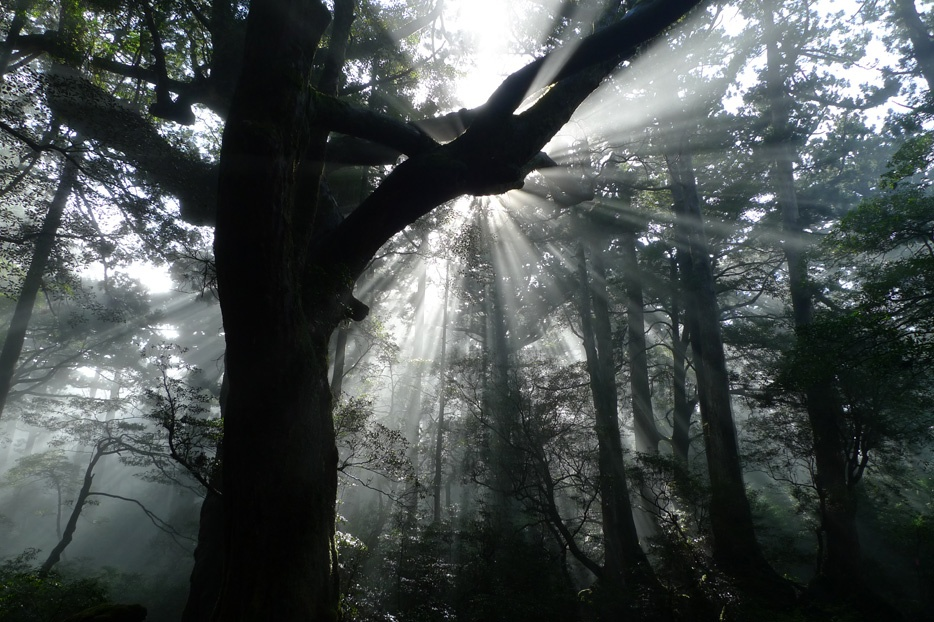 Among the ancients on Yakushima